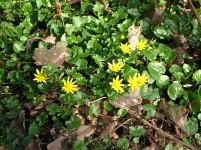 Specielt om foråret er skovbunden helt fantastisk med alle sine blomster, der myldrer frem.